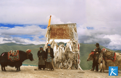 yak selvatico-aref international onlus-animali selvatici-ambiente in tibet-ambiente tibetano-tibetani